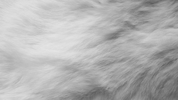 cuidar abrigo de piel